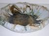ceramics023